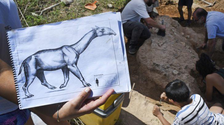 """Arroyo Seco , 04 de Enero de 2019 Descubrieron restos casi completos de mamífero prehistórico en Arroyo Seco """"Entre un camello y un tapir"""", es la descripción del paleontólogo Luciano Rey. Calculan que el ejemplar que dejó su marca detrás de un frigorífico vivió hace entre 20 y 40 mil años. Lo encontró un vecino. Su presencia en la región había sido informada por Charles Darwin.- Foto: JUAN JOSE GARCIA"""