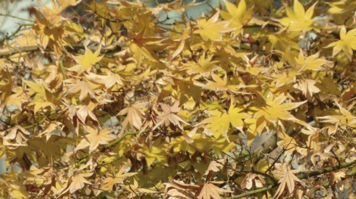 floral_zu_-gran-buddha-de-kamakura