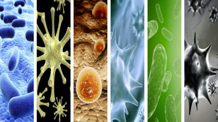 Collection of vertical banners with pathogenic bacterias and viruses. 3d render