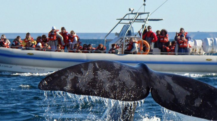 avistaje-de-ballenas